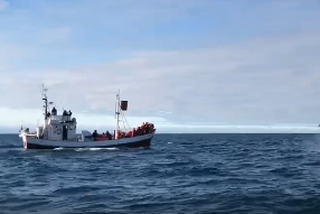 Forvitnir hvalir heilsuðu upp á heppna ferðalanga á Húsavík.