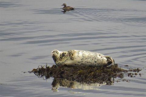 Seal Travel