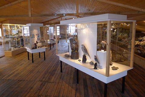 Museum of Natural History Neskaupstaður