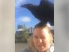 Ragnheiður and this feathery friend of Óðinn got along famously.