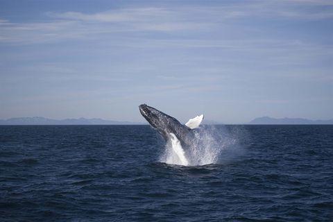 Elding - Reykjavík Whale Watching