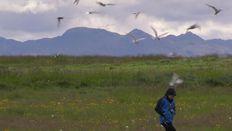 The perils of disturbing the nesting Arctic Tern