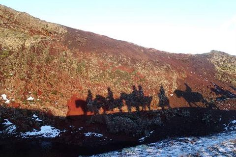 Islenski hesturinn - The Icelandic Horse