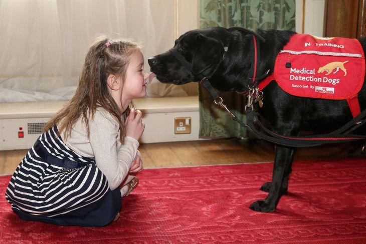 Cerys Davies, 6 ára, er með sykursýki. Hér er hún með hjálparhundinum sínum Wendy en ...