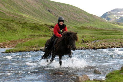 Langhus Horse Farm