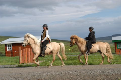 Lytingsstaðir Icelandic Horse Farm