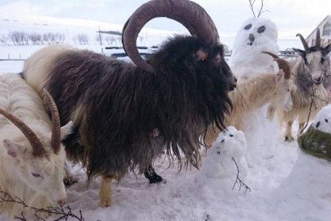 Rúnalist Stórhól - Art craft and animals