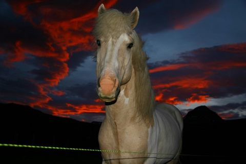 Fell Horse Rental