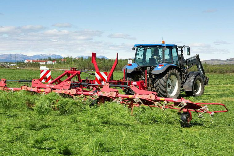 It's likely Icelandic farmers will harvest three times over the summer. This only happens when ...