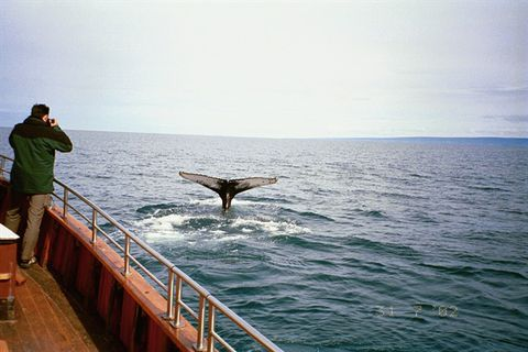 Salkawhalewatching.is