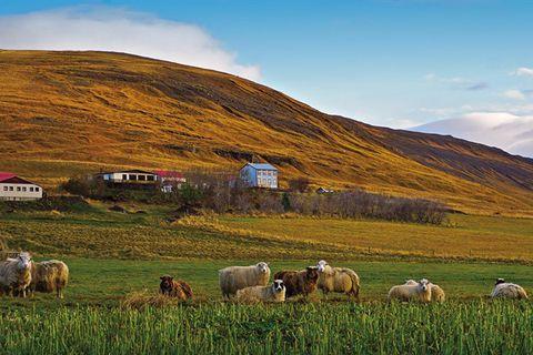 Sauðafell Guesthouse