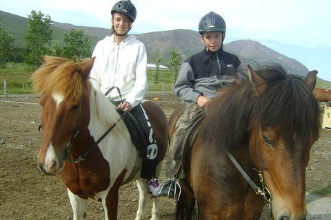 Icelandic horse service Tvistur
