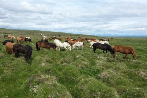 Horses and Tours