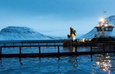 Ala ófrjóan lax við Ísland