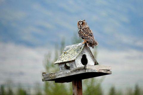 A camera shy owl was finally captured on film last weekend.