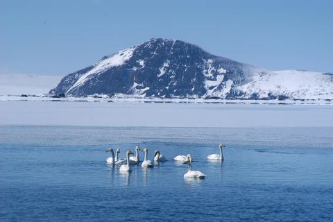 Beautiful lake Mývatn in winter.