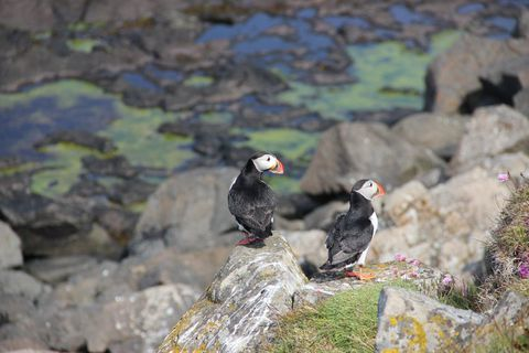 Visitors share the island with a fascinating bird population.