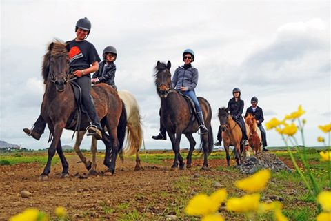 Eldhestar - Volcano Horses
