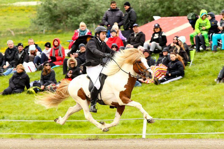 """""""Útgangspunkturinn er að íslenski hesturinn flytur okkur á ótroðnar sloðir og leyfir okkur að upplifa ..."""