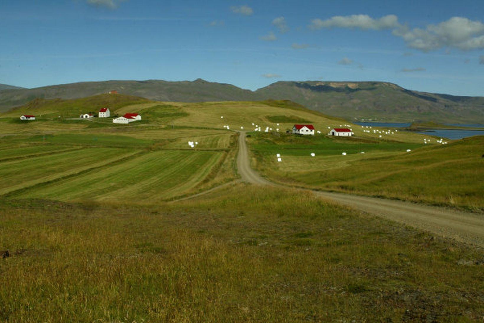 Talsverður jarðhiti hefur fundist í landi Hvammsvíkur í Hvalfirði.