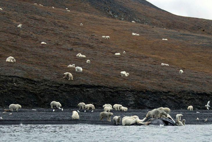 Ferðamennirnir héldu í fyrstu að ísjaka hefði rekið á land á eyjunni en þarna reyndist ...