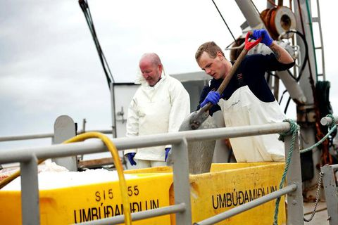 The boat Hrafnareyður bringing minke whale meat to Hafnarfjörður harbour.