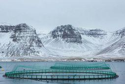 Sjókvíar. Gatið á netapokanum hjá Arnarlaxi var 7x12 cm að stærð.