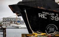 Sea Sheppard og Hvalur 9 hittast á ný