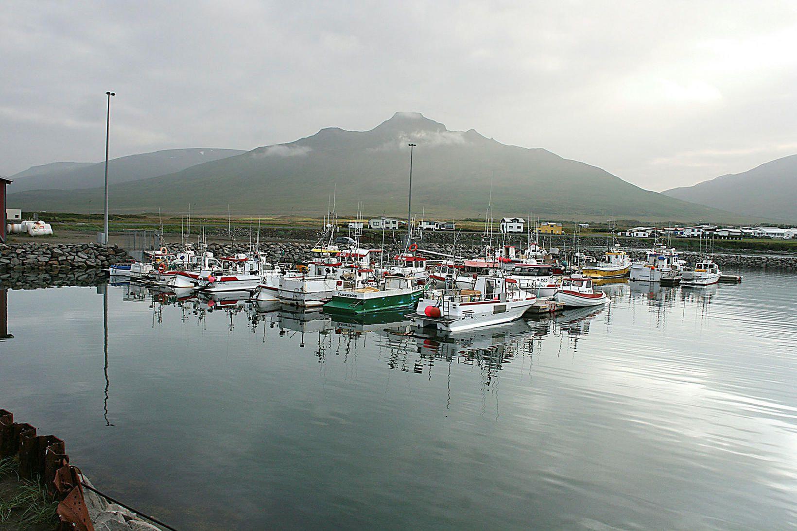 Hluti strandveiðibátanna sem gerður var út frá Skagaströnd í sumar …