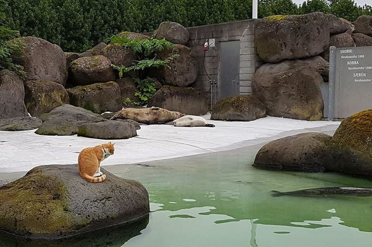 Iceland Zoo Cat Enjoys Animals Too