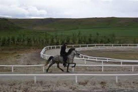 HorseRidingIceland.is
