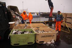 Heildarafli fiskiskipanna minnkaði um 5% í október þessa árs miðað við sama mánuð í fyrra. …