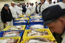 Fiskmarkaðurinn í Grimsby er einn sá stærsti í Bretlandi en yfirleitt koma um 75% fisksins …