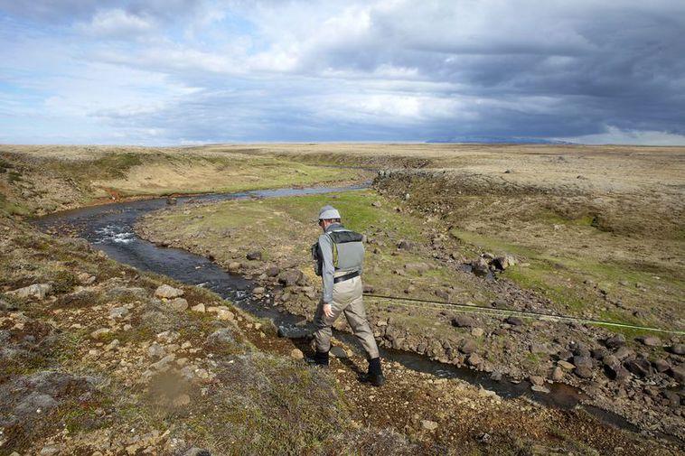 The situation in Kjarrá/Þverá river is unprecedented.
