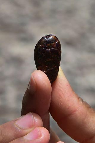 Kakóbaun er full af efni sem getur bætt minni fólks.
