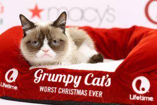Grumpy Cat naut mikilla vinsælda á samfélagsmiðlum.