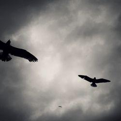 Tveir fuglar