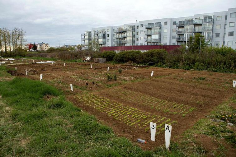 Vegetable gardens in Reykjavik.