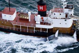 Hvalur 9 siglir í átt að landi með langreyðar á síðunni.