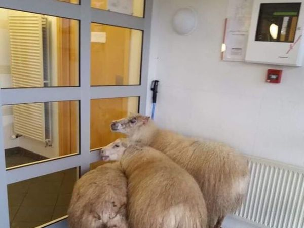 Unusual visitors at the healthcare centre.