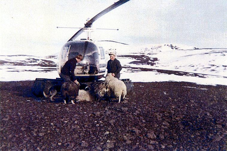 TF-EIR at the Landmannaafréttur sheep round-up.