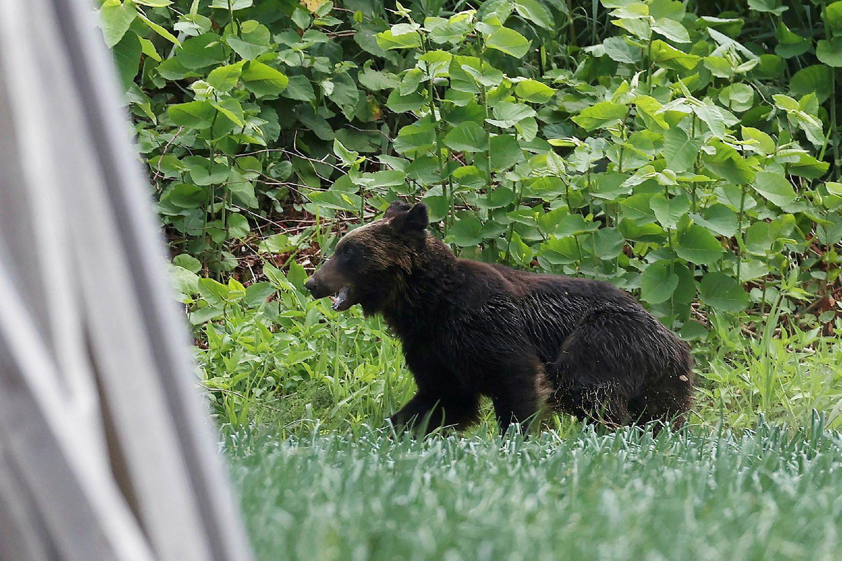 Björninn sem um ræðir.
