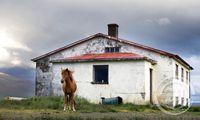 Ónefndur hestur við ónefnd eyðibýli