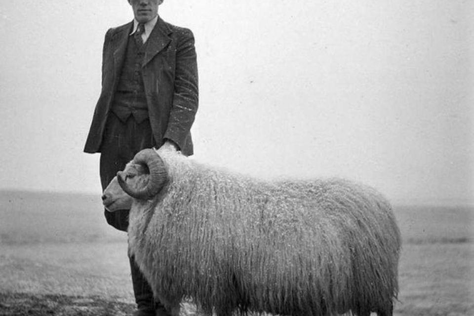 Hrútur með velgjörðarmanni sínum við Hraunsrétt 1938.