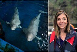 Audrey Padgett, framkvæmdastjóri Sea Life Trust í Vestmannaeyjum, segir mikilvægt að sýna ábyrgð og velja …
