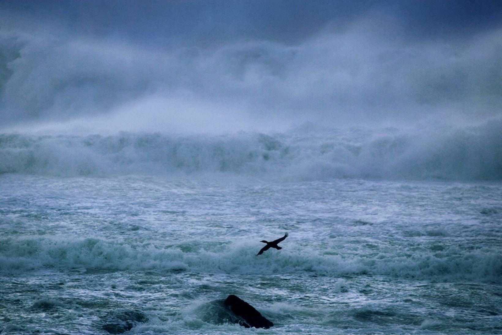 ASC vill útvega um 2 milljónum breskra heimila vistvæna orku.