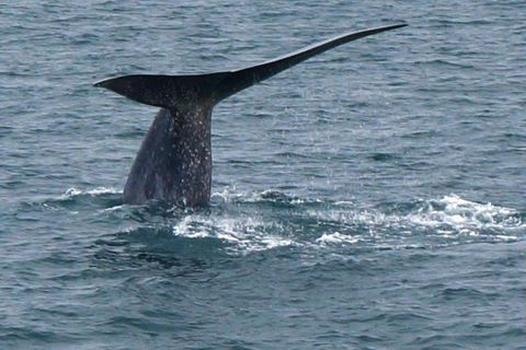 Hörður Jónasson took these impressive photos of a blue whale on a whale watching trip on Saturday.