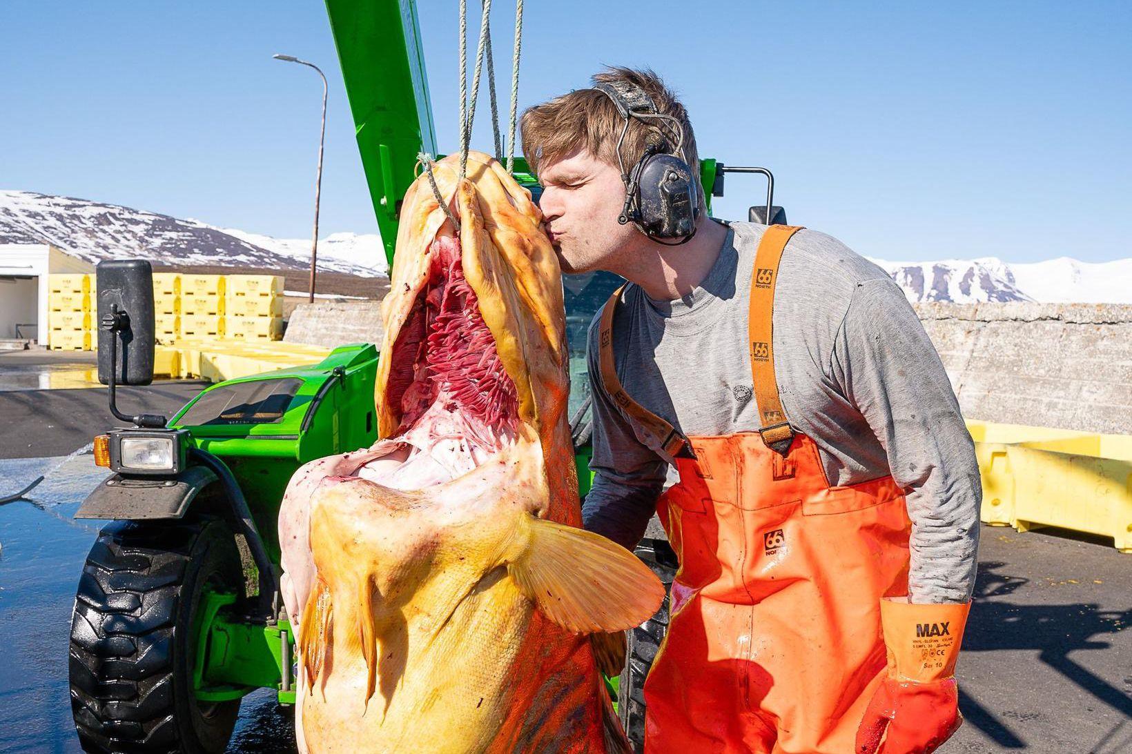 Þorskurinn stóri kysstur bless.
