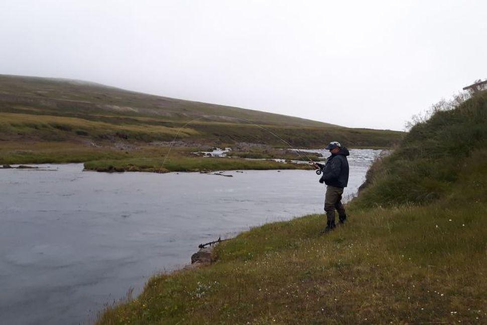 Glímt við lax í Fjárhyl í Selá í Vopnafirði í ...