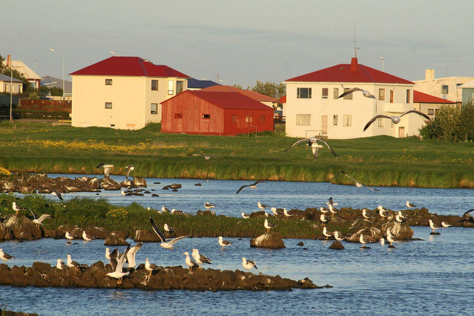 Fuglalíf í Sandgerði. Fimmtán vilja leiða nýtt sameinað sveitarfélag.